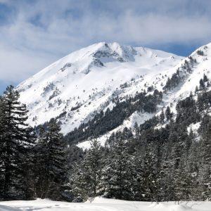 Хвойнати връх